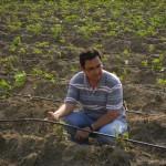 le système d'irrigation goûte à goûte